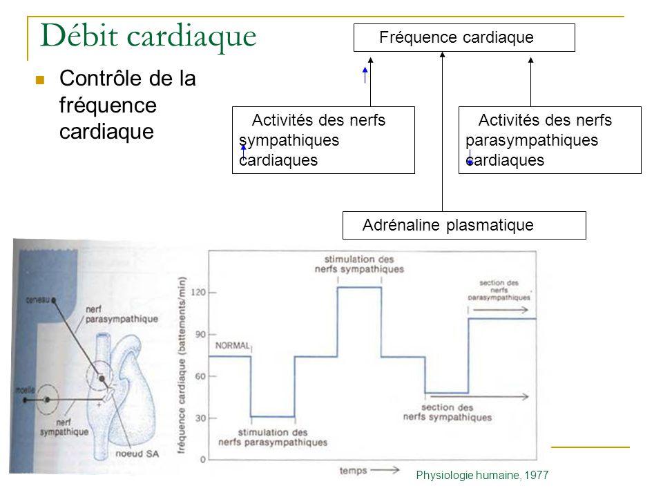 Débit cardiaque Contrôle de la fréquence cardiaque Fréquence cardiaque