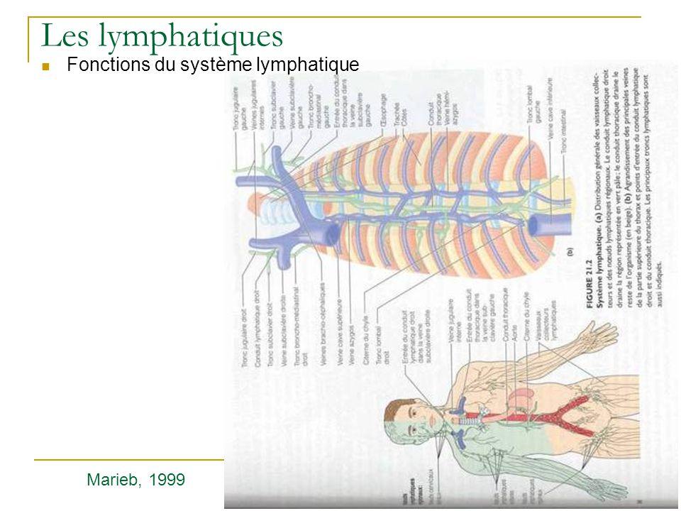 Les lymphatiques Fonctions du système lymphatique Marieb, 1999