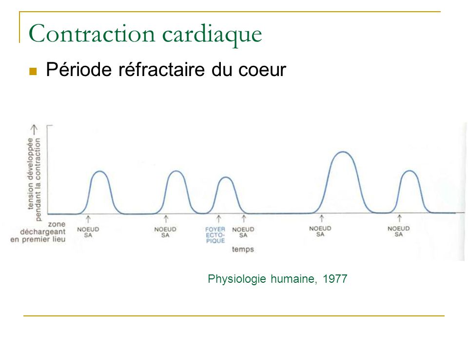 Contraction cardiaque