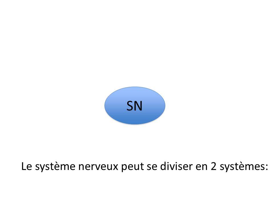 SN Le système nerveux peut se diviser en 2 systèmes: