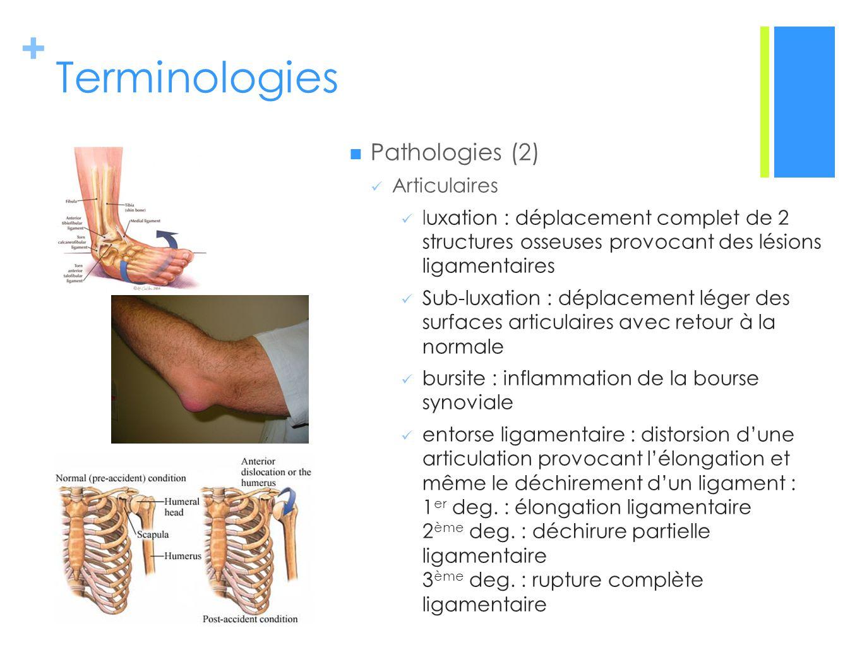 Terminologies Pathologies (2) Articulaires