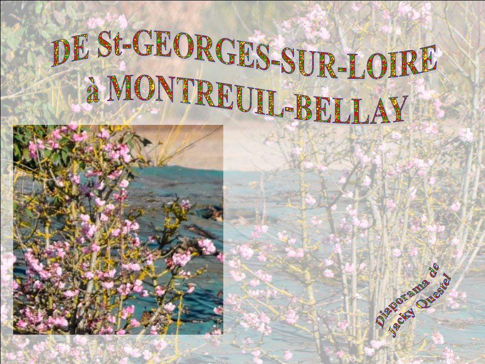 DE St-GEORGES-SUR-LOIRE