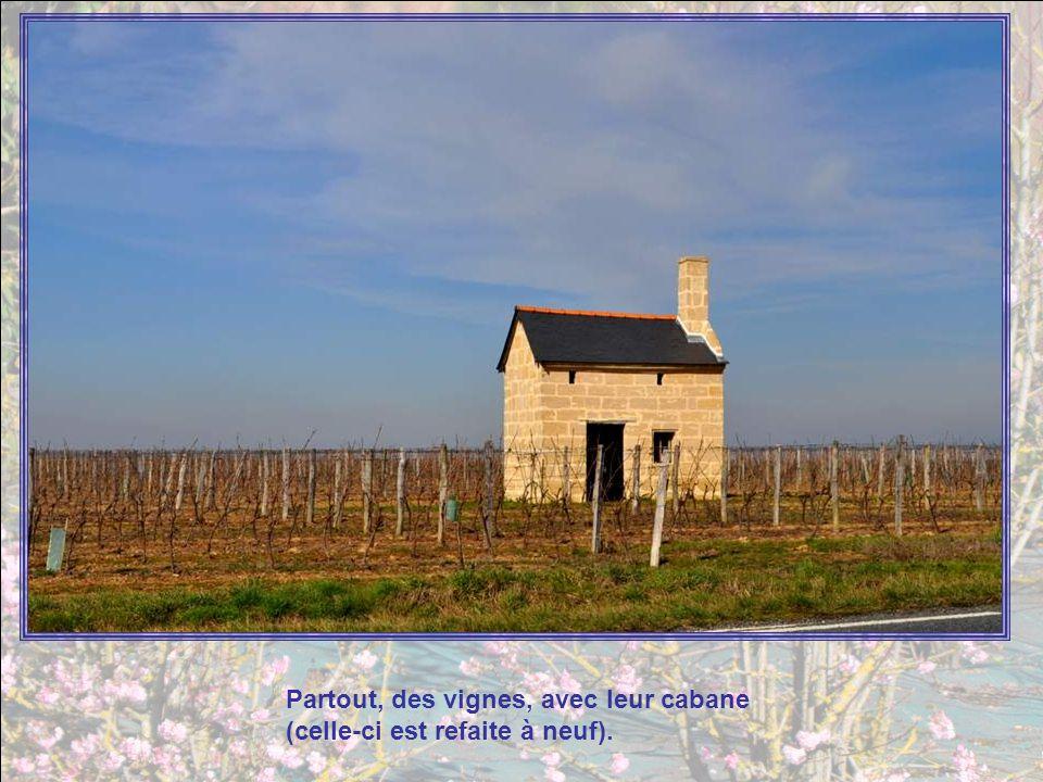 Partout, des vignes, avec leur cabane (celle-ci est refaite à neuf).