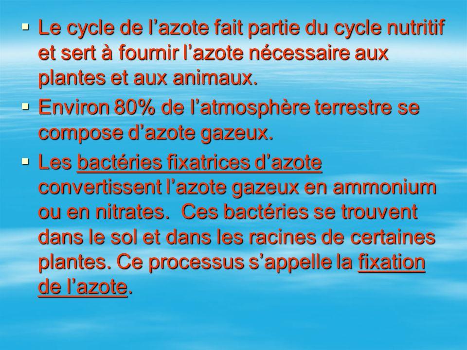 Le cycle de l'azote fait partie du cycle nutritif et sert à fournir l'azote nécessaire aux plantes et aux animaux.