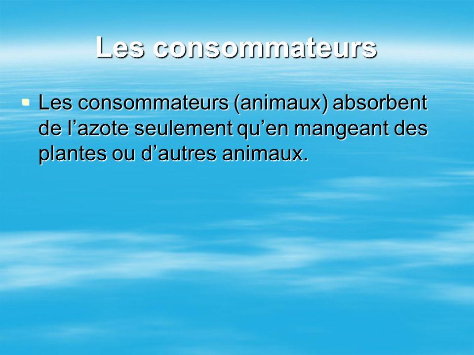 Les consommateurs Les consommateurs (animaux) absorbent de l'azote seulement qu'en mangeant des plantes ou d'autres animaux.
