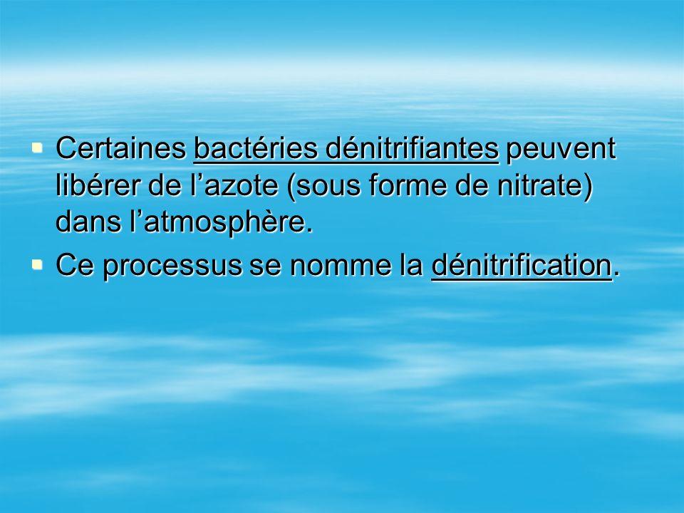 Certaines bactéries dénitrifiantes peuvent libérer de l'azote (sous forme de nitrate) dans l'atmosphère.