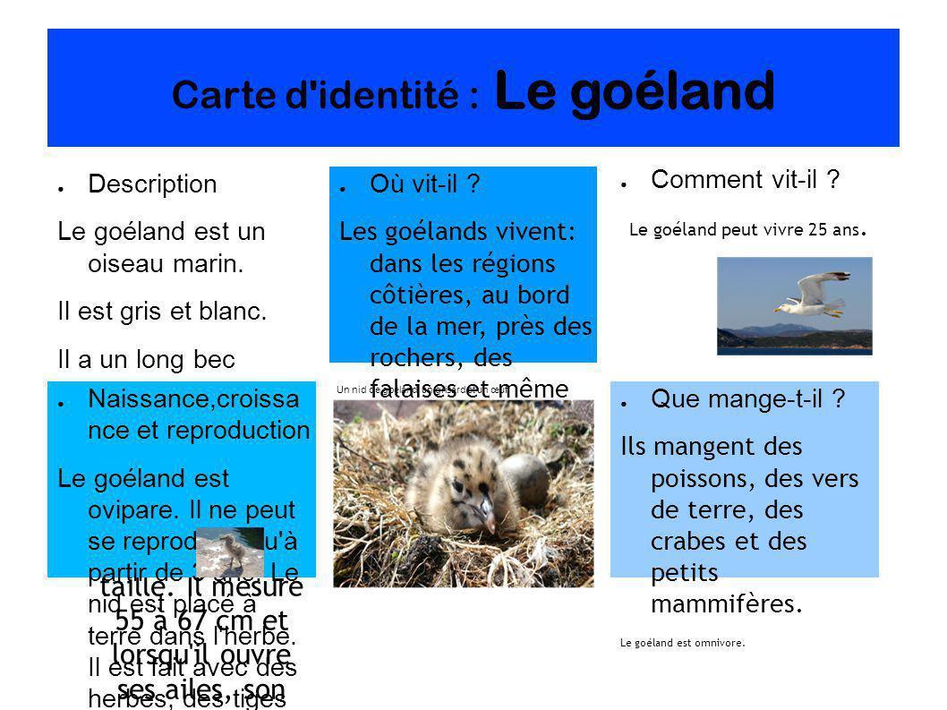 Carte d identité : Le goéland