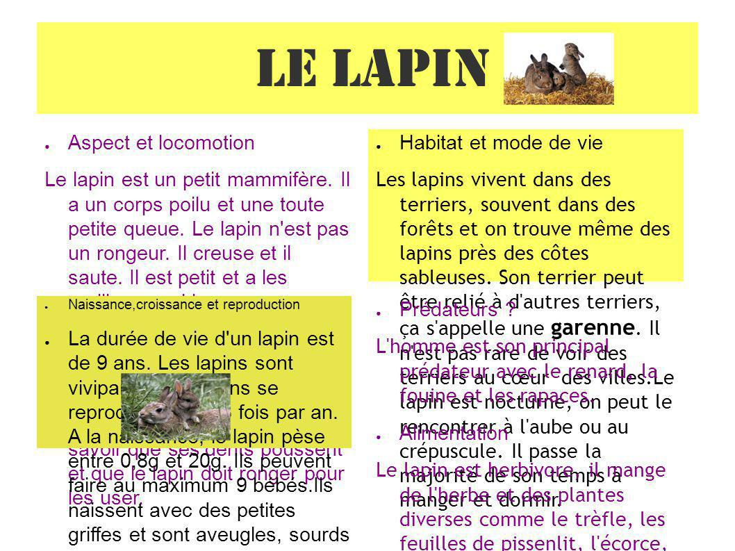 Le lapin Aspect et locomotion