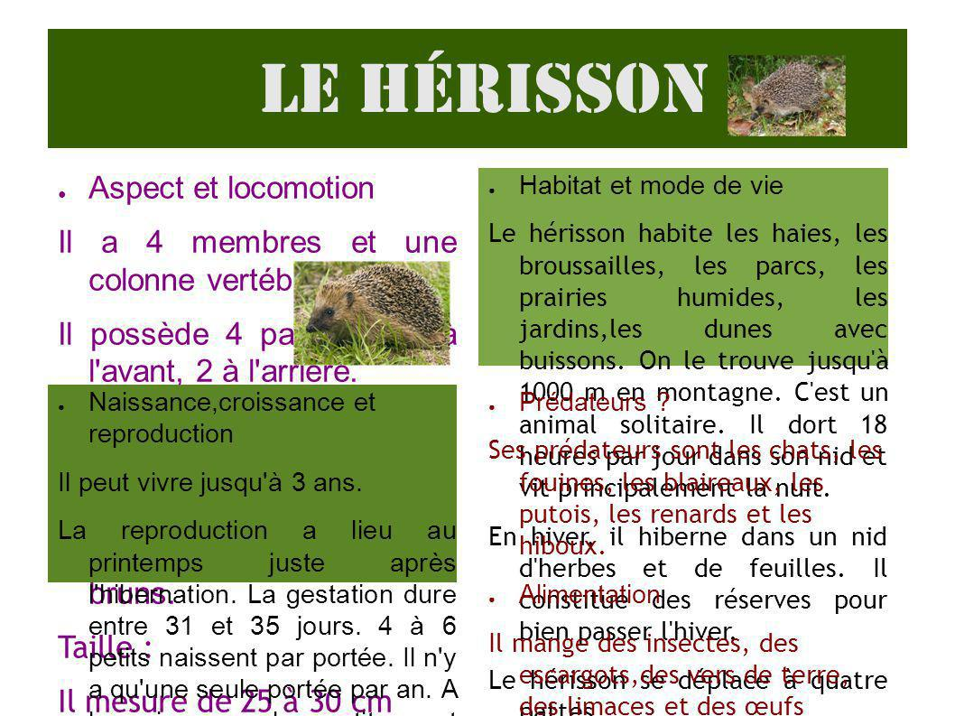 Le hérisson Aspect et locomotion