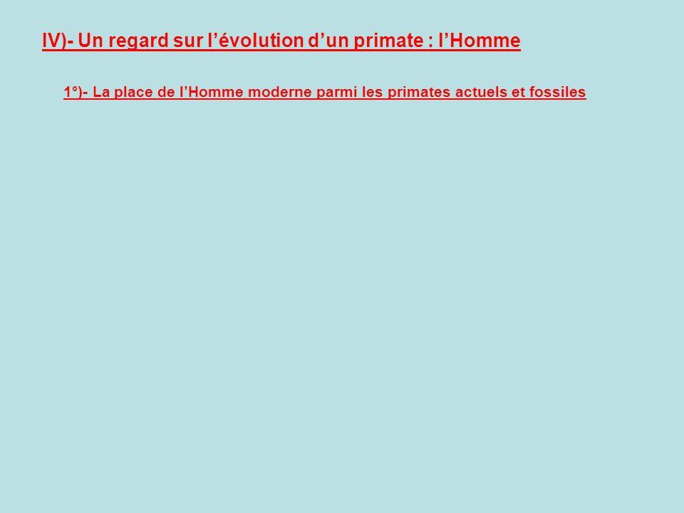 IV)- Un regard sur l'évolution d'un primate : l'Homme