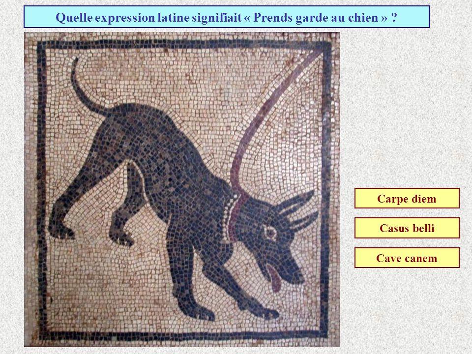 Quelle expression latine signifiait « Prends garde au chien »