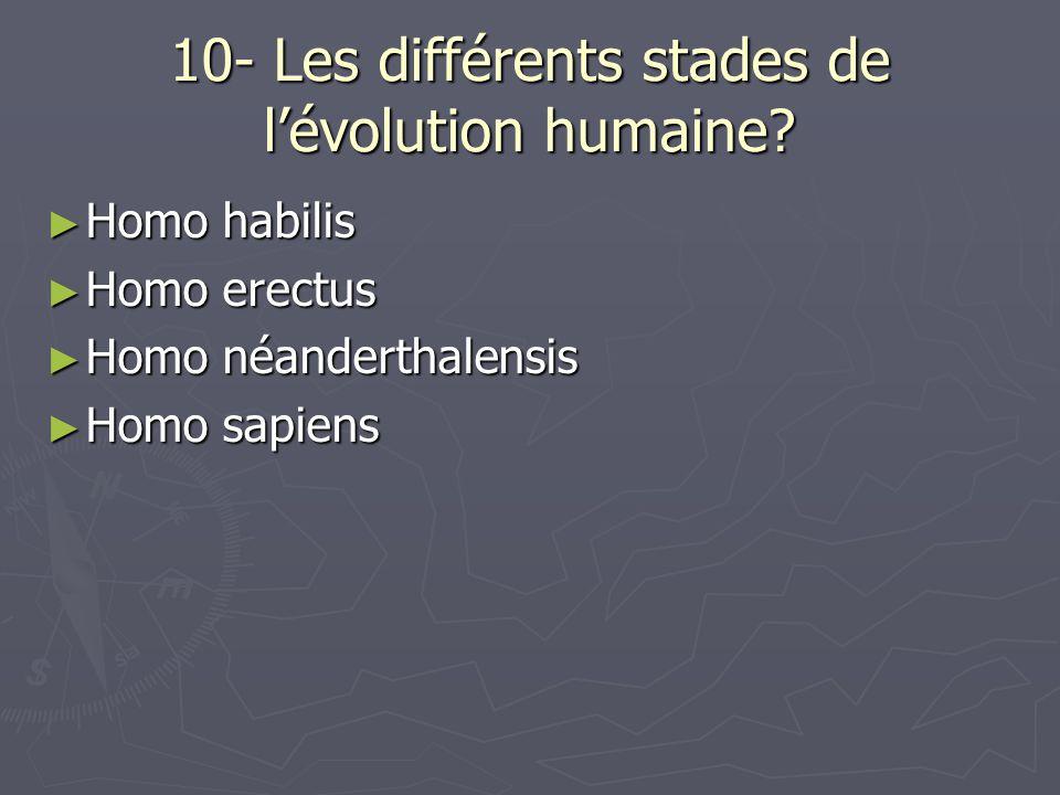 10- Les différents stades de l'évolution humaine