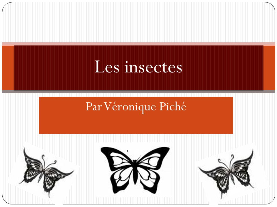 Les insectes Par Véronique Piché