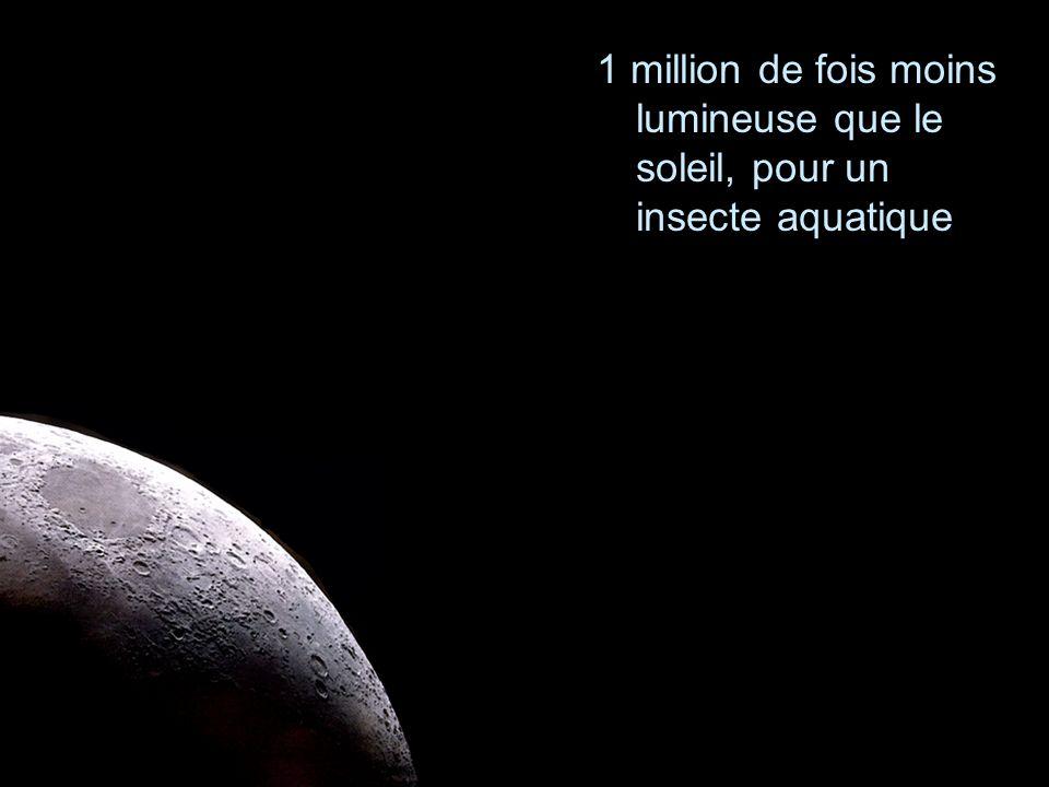 1 million de fois moins lumineuse que le soleil, pour un insecte aquatique