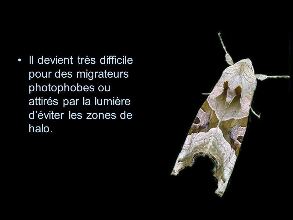 Il devient très difficile pour des migrateurs photophobes ou attirés par la lumière d'éviter les zones de halo.