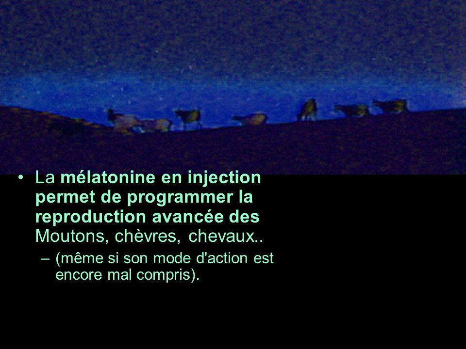 La mélatonine en injection permet de programmer la reproduction avancée des Moutons, chèvres, chevaux..