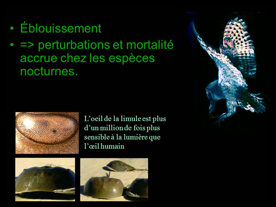 => perturbations et mortalité accrue chez les espèces nocturnes.