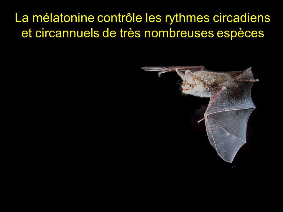 La mélatonine contrôle les rythmes circadiens et circannuels de très nombreuses espèces