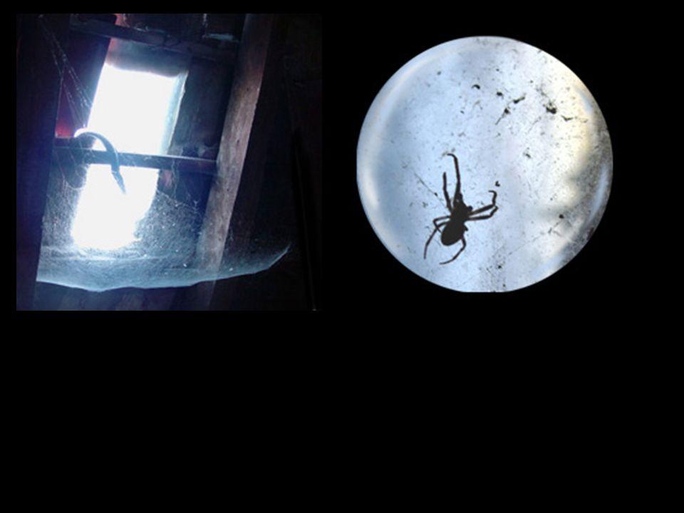 De nombreuses araignées, d'instinct tissent leurs toiles devant les trous qui laissent passer la lumière de la lune et du soleil.