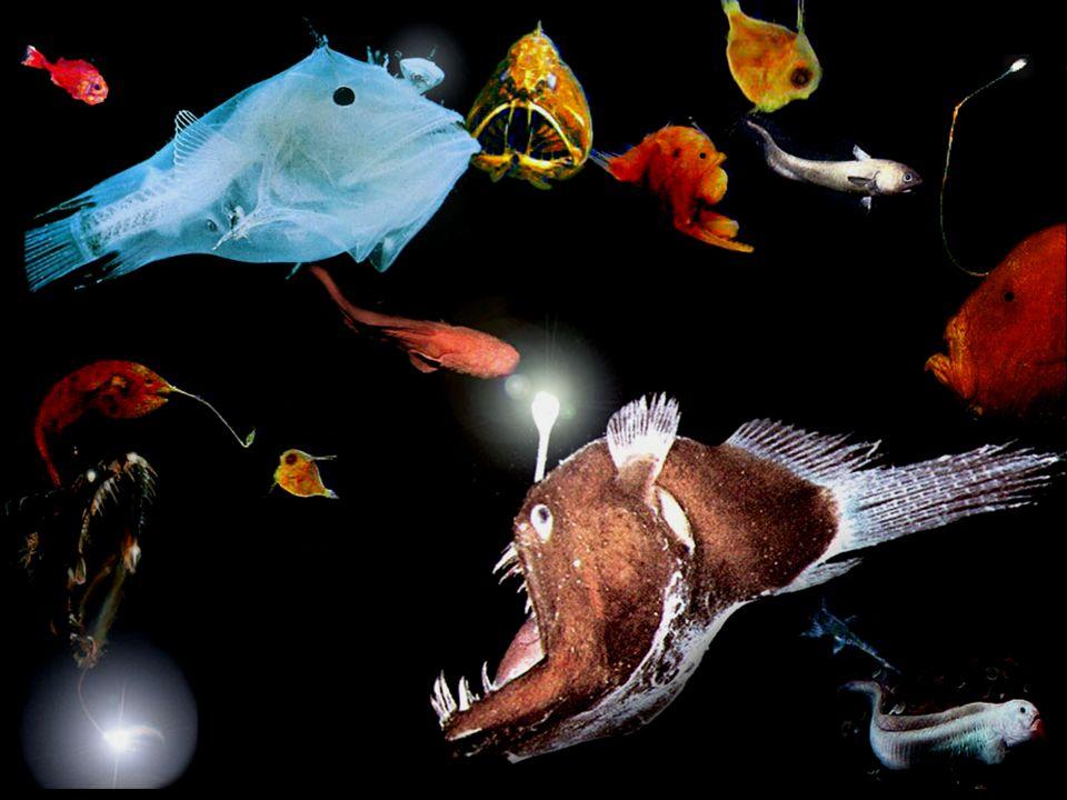 Les espèces ont été rassemblées pour les besoins de l'illustration, mais elles sont très dispersées dans leur environnement.