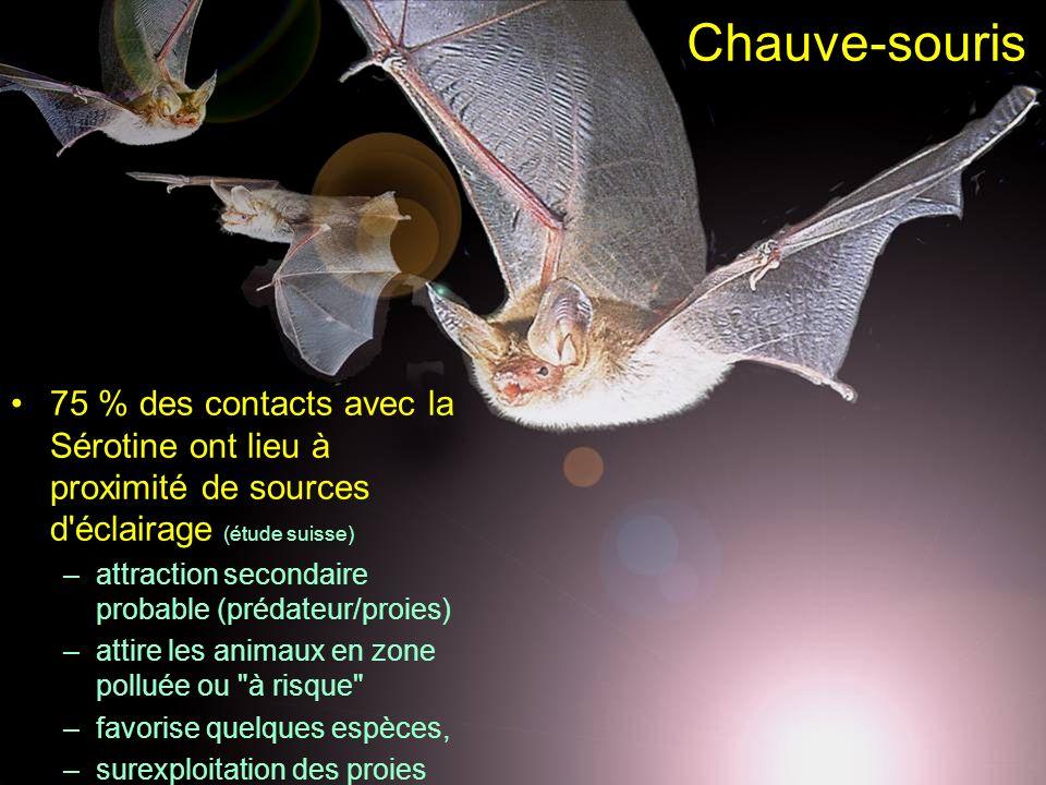 Chauve-souris75 % des contacts avec la Sérotine ont lieu à proximité de sources d éclairage (étude suisse)