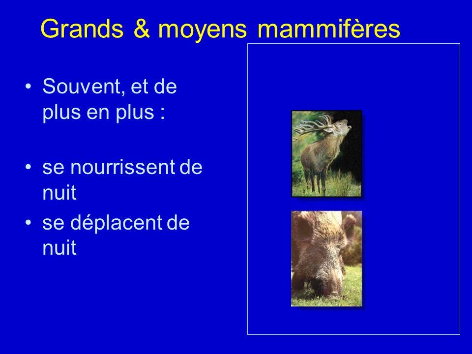 Grands & moyens mammifères