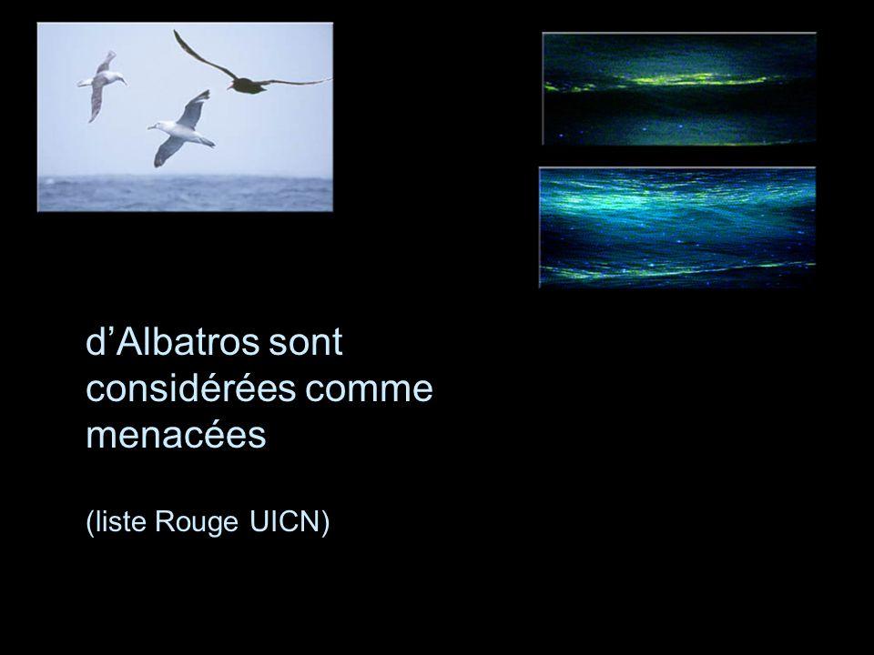 Les 21 espèces d'Albatros sont considérées comme menacées (liste Rouge UICN)