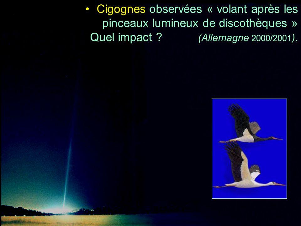 Cigognes observées « volant après les pinceaux lumineux de discothèques » Quel impact (Allemagne 2000/2001).