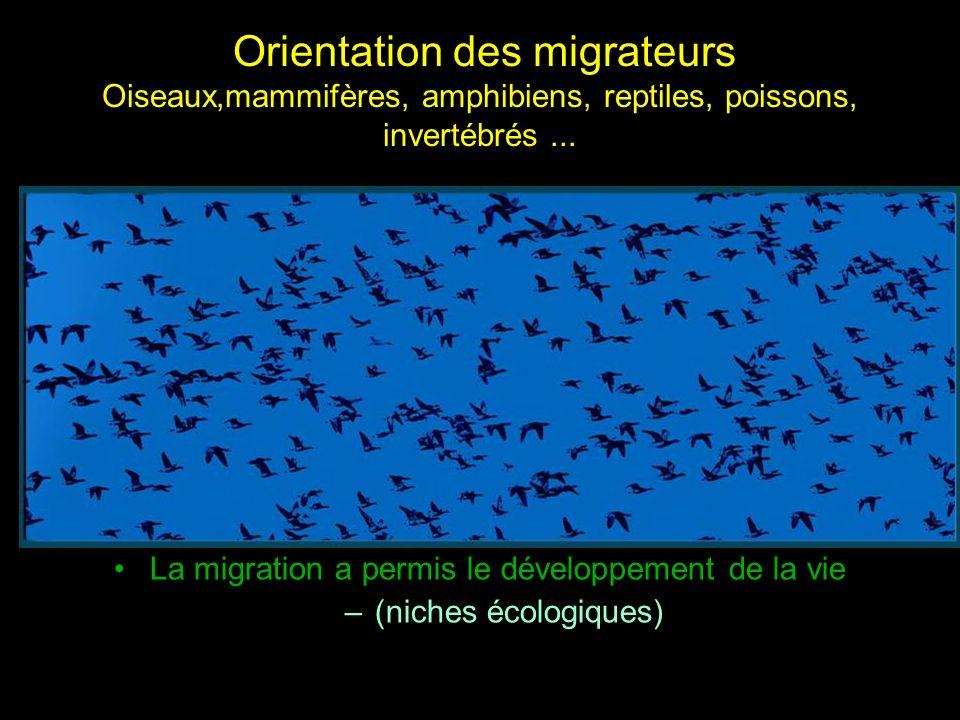 La migration a permis le développement de la vie