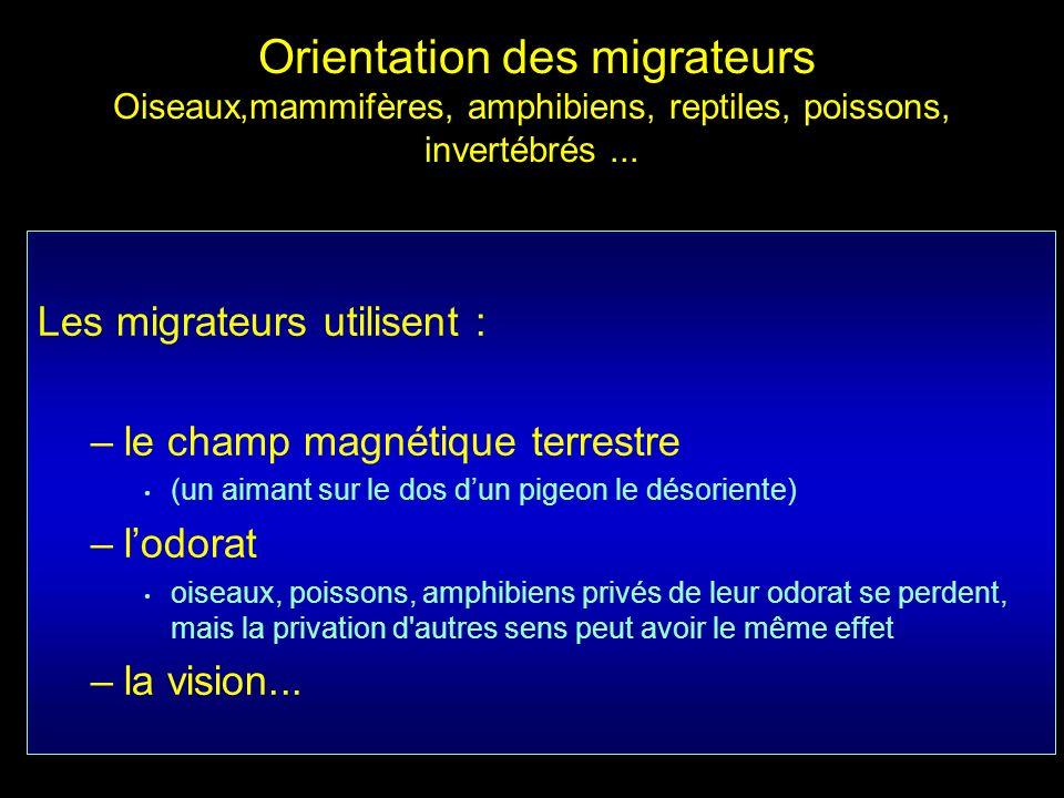 Les migrateurs utilisent : le champ magnétique terrestre l'odorat