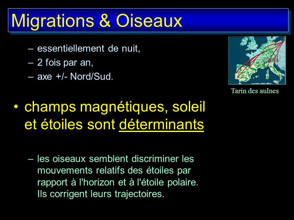 Migrations & Oiseauxessentiellement de nuit, 2 fois par an, axe +/- Nord/Sud. champs magnétiques, soleil et étoiles sont déterminants.
