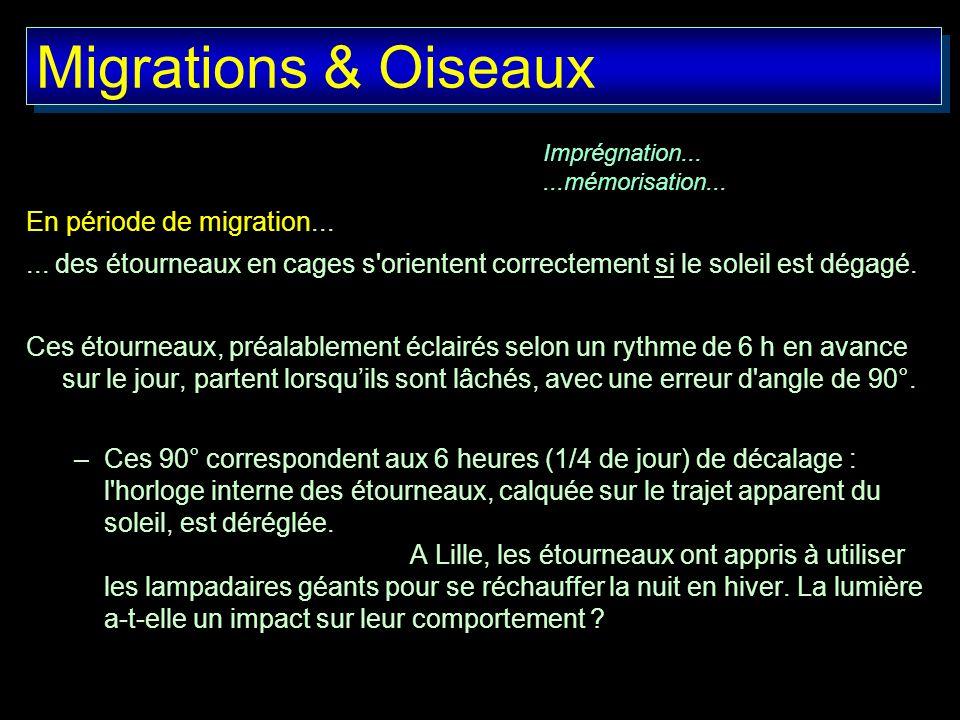 Migrations & Oiseaux En période de migration...