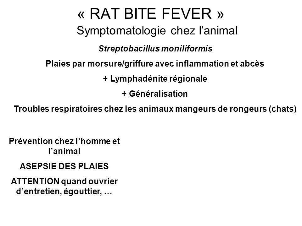 Symptomatologie chez l'animal