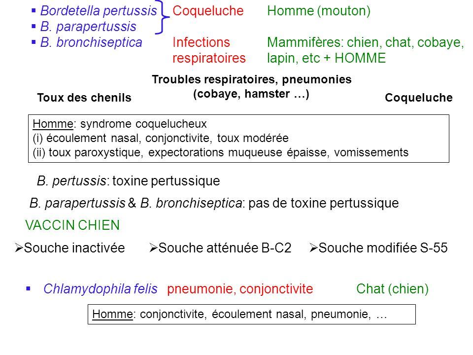 Troubles respiratoires, pneumonies (cobaye, hamster …)