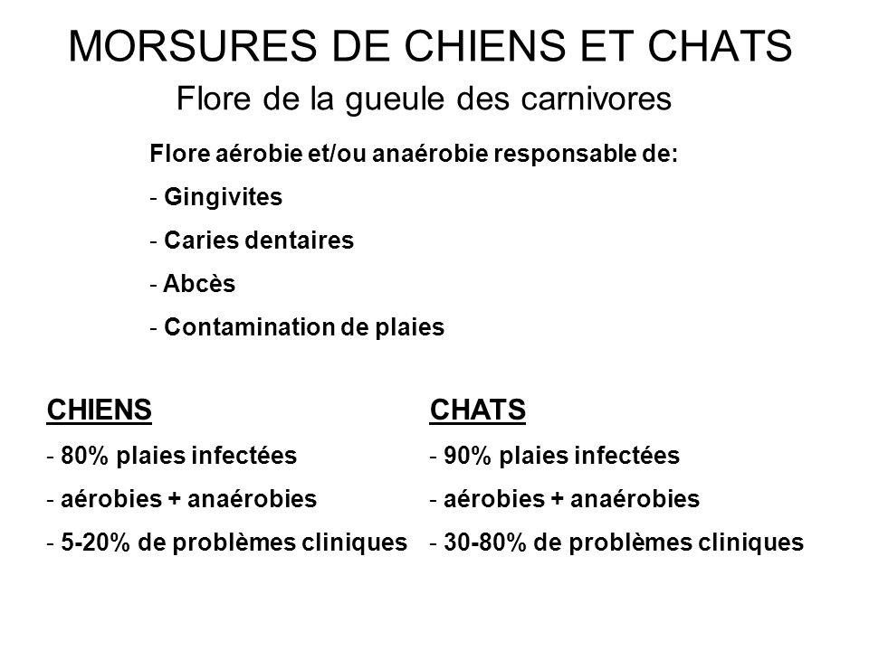 MORSURES DE CHIENS ET CHATS