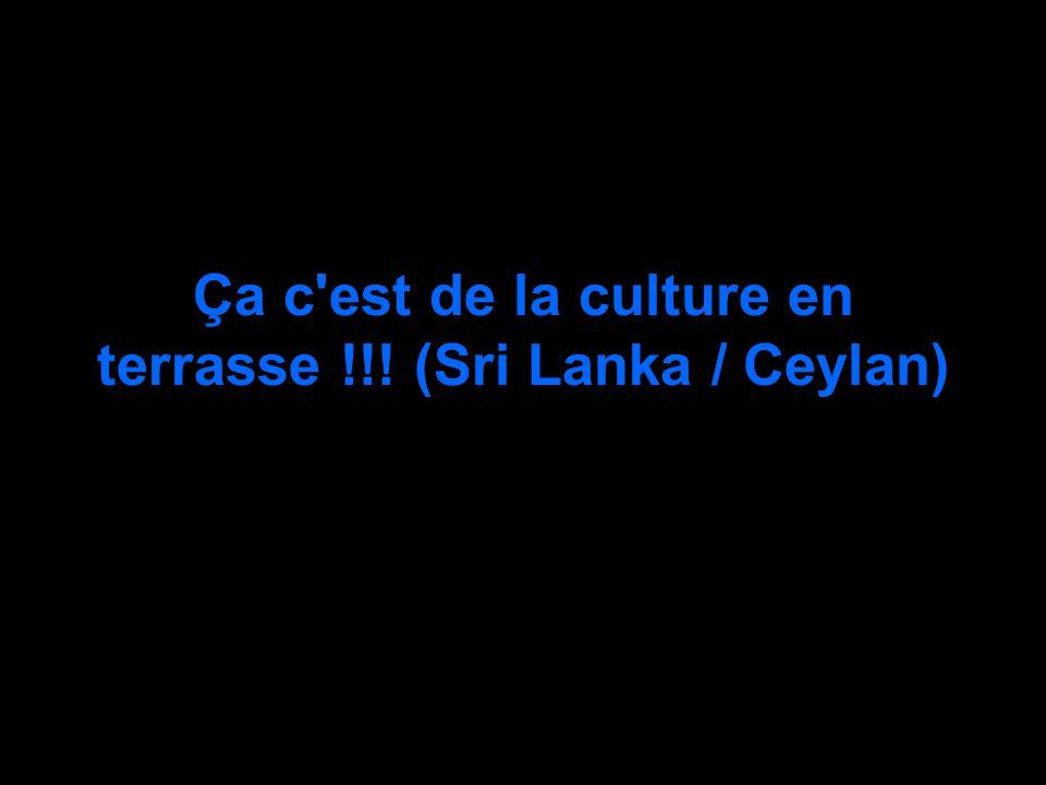 Ça c est de la culture en terrasse !!! (Sri Lanka / Ceylan)