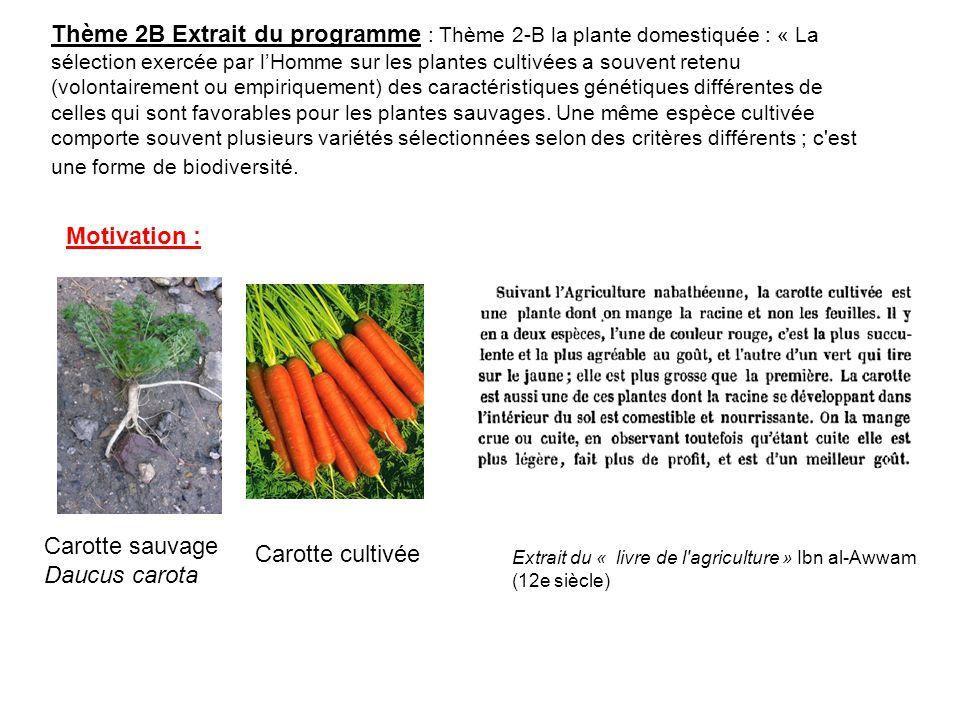 Carotte sauvage Daucus carota Carotte cultivée