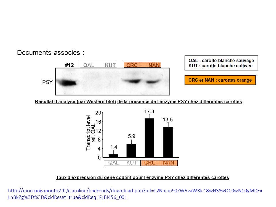 Documents associés : Résultat d'analyse (par Western blot) de la présence de l enzyme PSY chez différentes carottes.