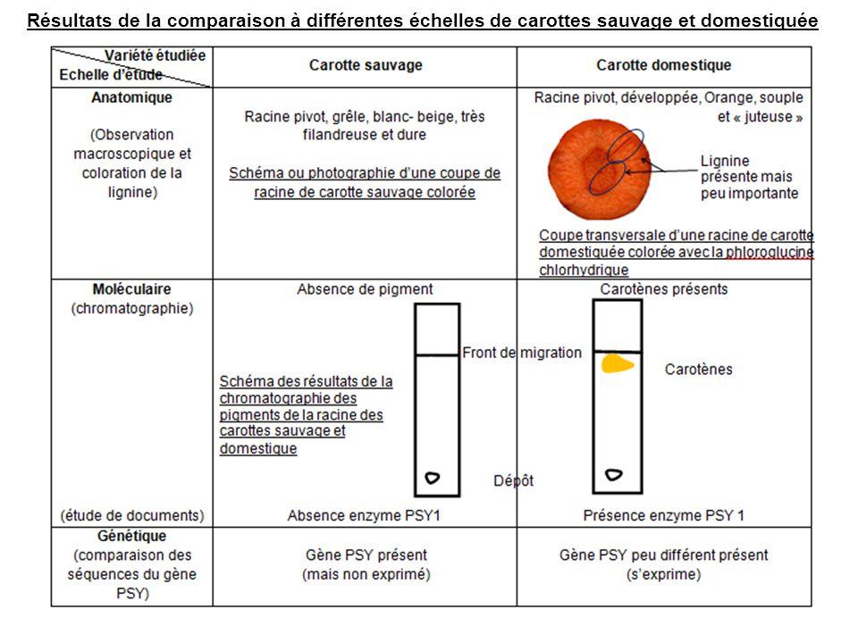 Résultats de la comparaison à différentes échelles de carottes sauvage et domestiquée