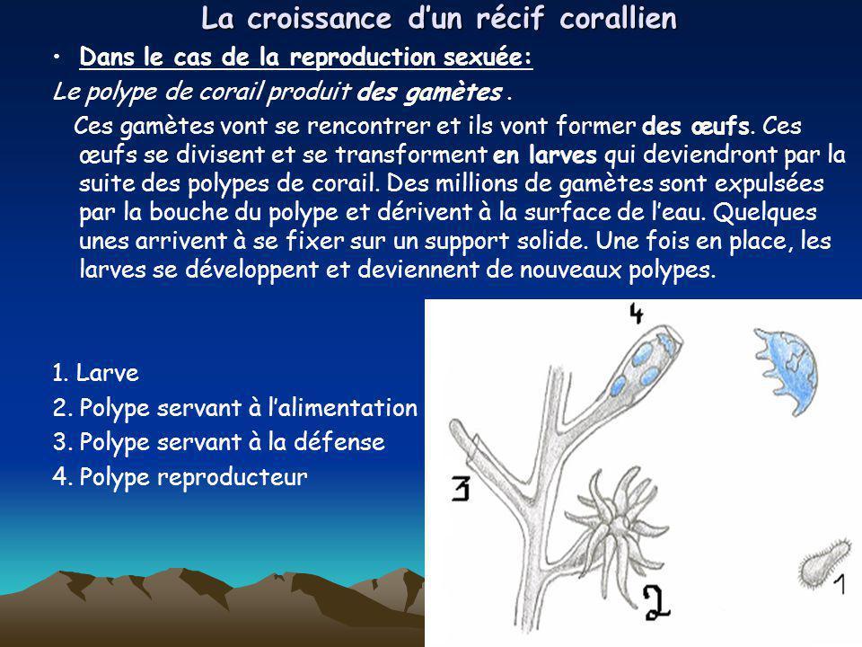 La croissance d'un récif corallien