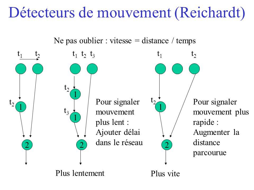 Détecteurs de mouvement (Reichardt)