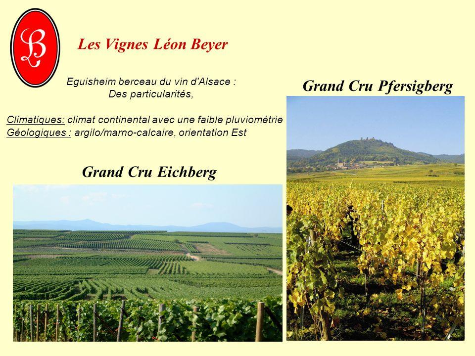 Eguisheim berceau du vin d Alsace :