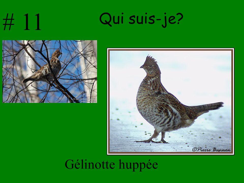 # 11 Qui suis-je Gélinotte huppée