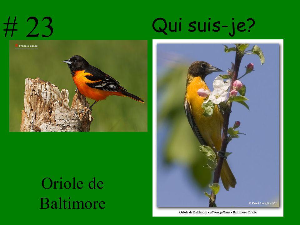 # 23 Qui suis-je Oriole de Baltimore