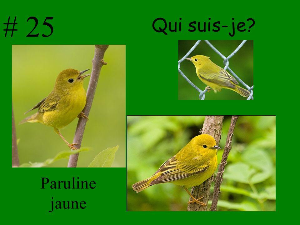 # 25 Qui suis-je Paruline jaune