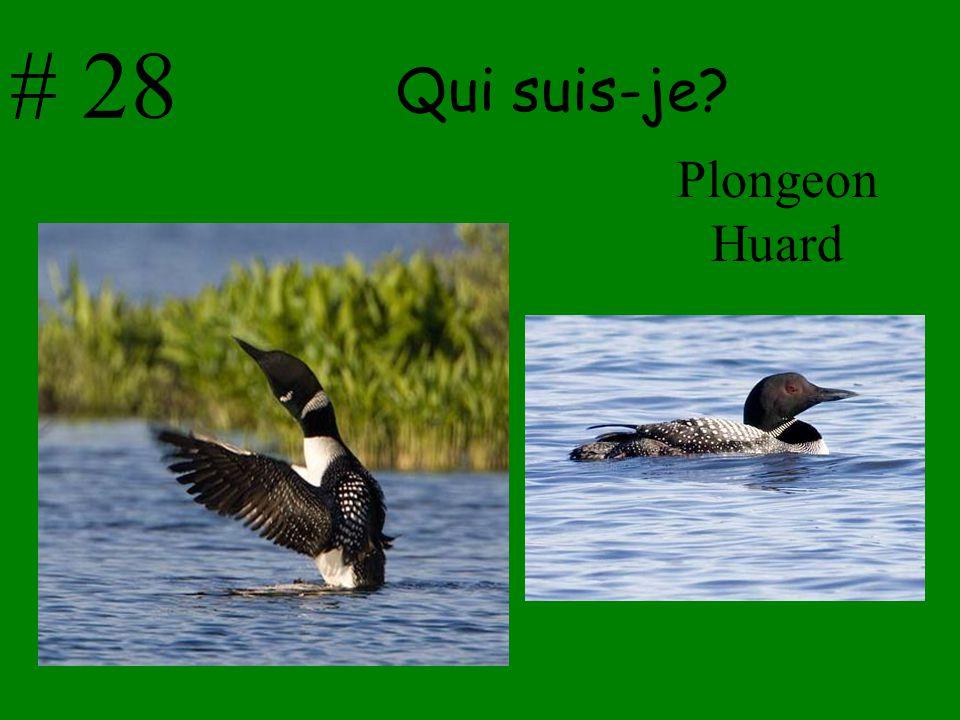 # 28 Qui suis-je Plongeon Huard