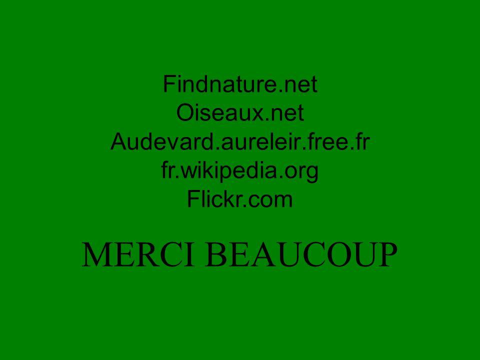 MERCI BEAUCOUP Findnature.net Oiseaux.net Audevard.aureleir.free.fr
