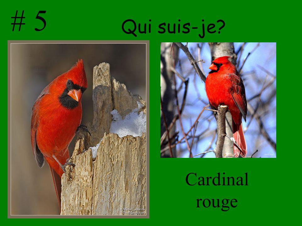 # 5 Qui suis-je Cardinal rouge