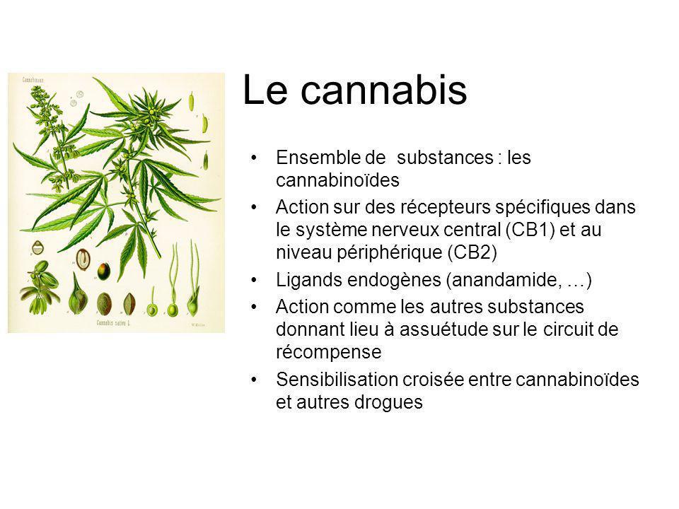 Le cannabis Ensemble de substances : les cannabinoïdes