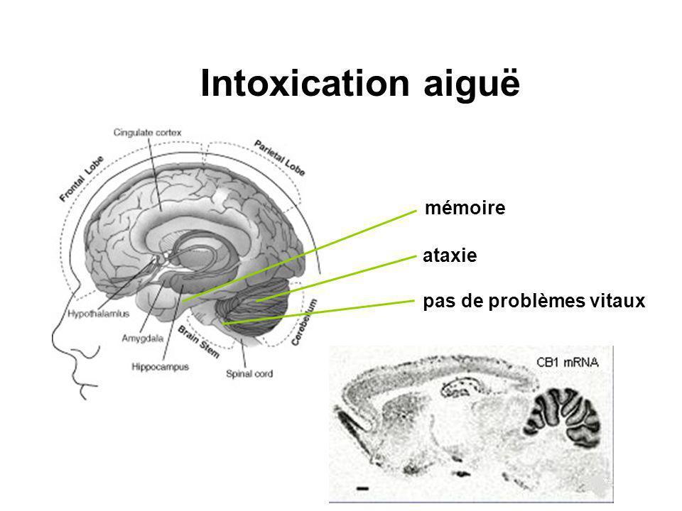 Intoxication aiguë mémoire ataxie pas de problèmes vitaux